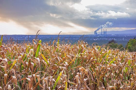 Clean air crops