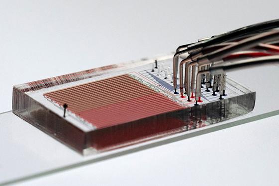 A single polymer chip