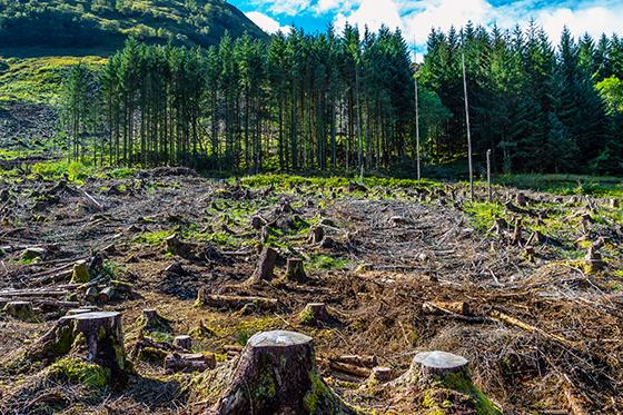 Deforestation in Scotland