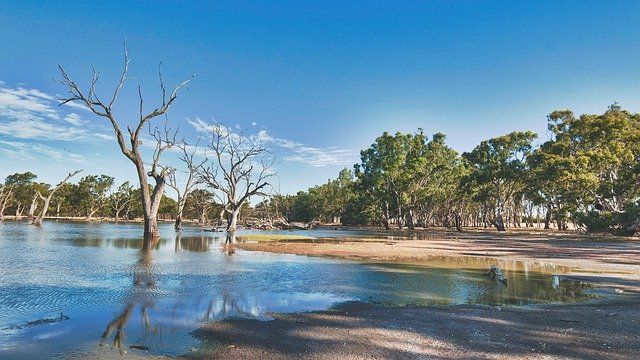 Australian riverbank - blue skies, gum trees and reflections in the water