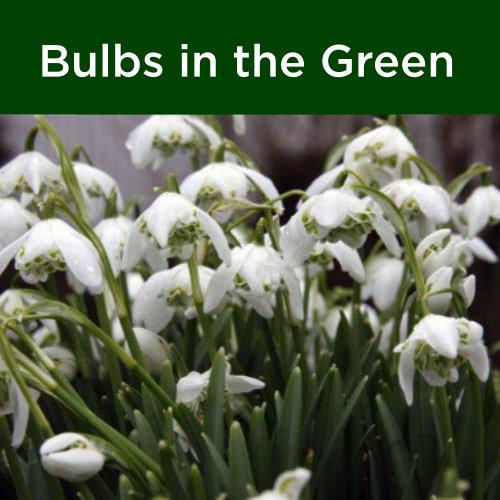Bulbs in the Green