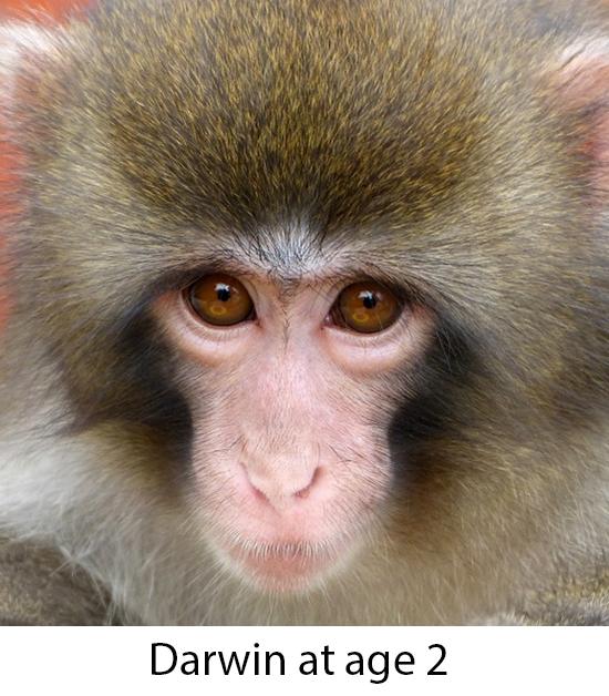 Darwin at age 2
