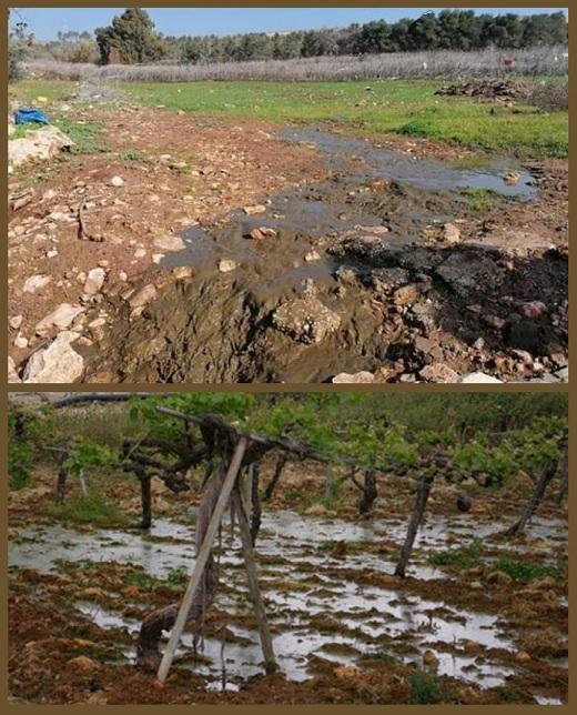besmetting                                                       rioolslib van                                                       nederzetting