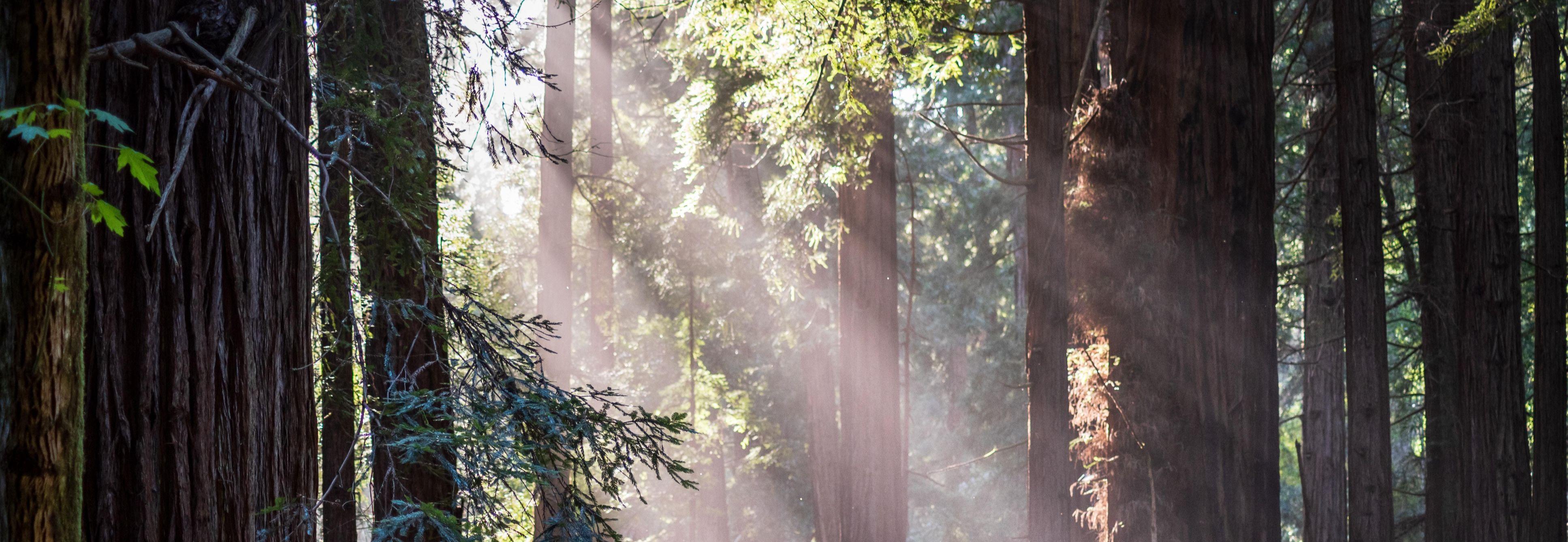 Light spills through the forest