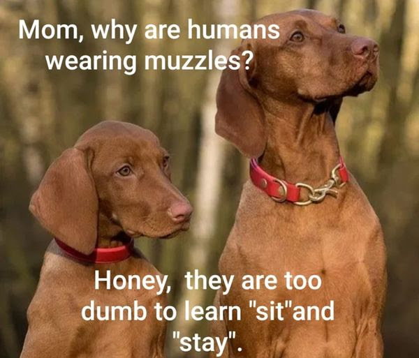 Dogs wondering why all the humans are wearing muzzles