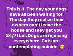 This is it. The day your dogs have been waiting for. The day they realize their owners can't leave the house and they get you 24/7! Lol. Dogs are rejoicing everywhere. Cats are contemplating suicide.
