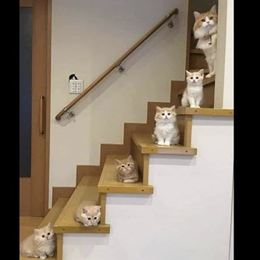 staircase with a cat on each stair tread
