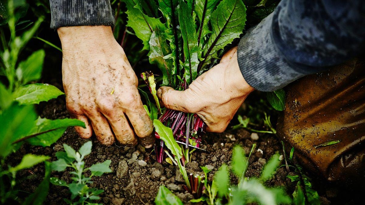 gardening by hand