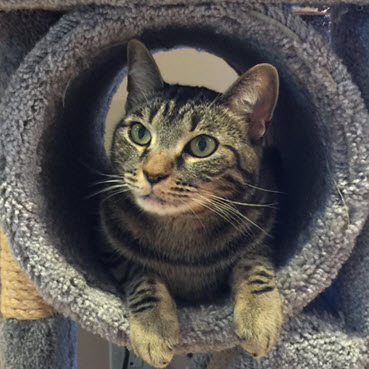 cat sitting in a large pipe