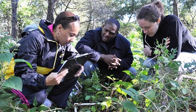 Community scientists observe plants