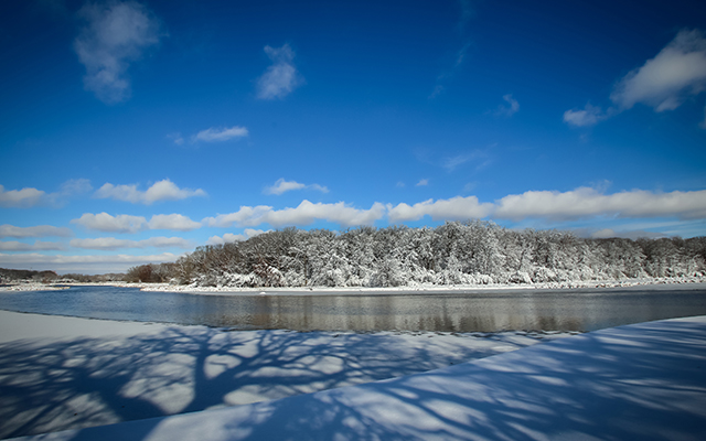 Busse Woods Shoreline Covered in Snow