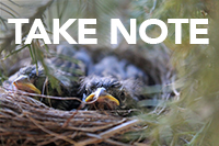 """Chipping Sparrow nestlings in a nest, with the words """"Take Note"""" on the image."""