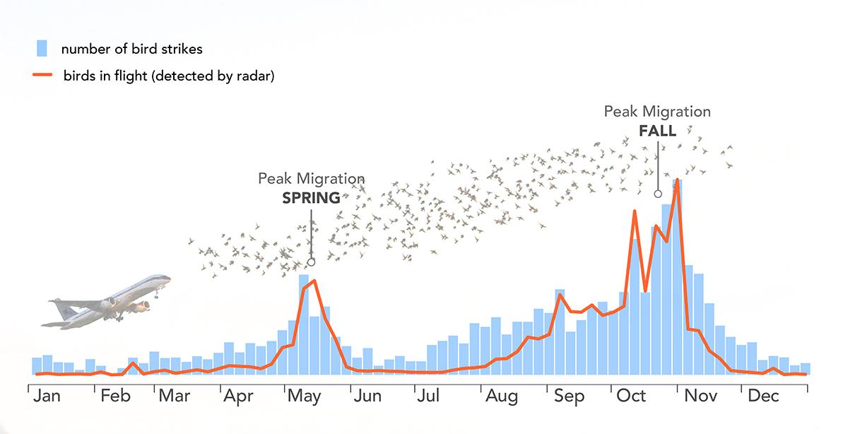 migration & plane strikes graph