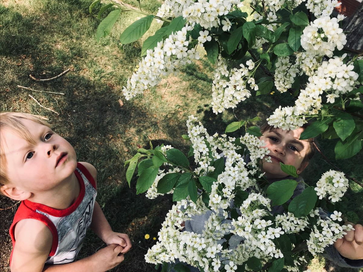 Two children looking up at flowering shrubbery.