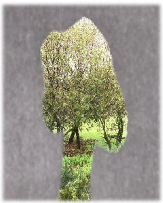 עץ טו בשבט