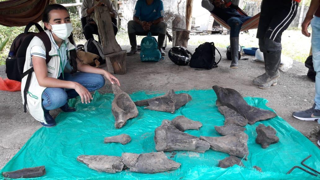 Mineros encuentran restos de un mastodonte en Risaralda