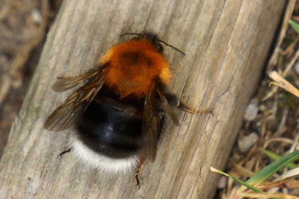 Bee Identification Website