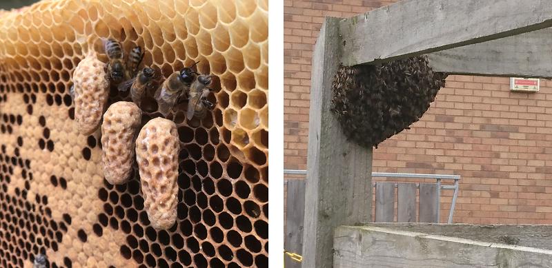Queen Cells & Swarm Season