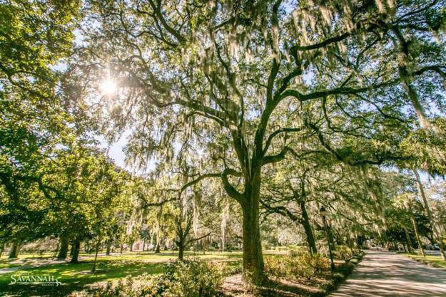 Savannah's Oaks