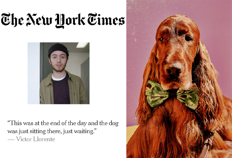 Victor Llorente, the New York Times logo, and Llorente's photo of an Irish Setter wearing a bow tie