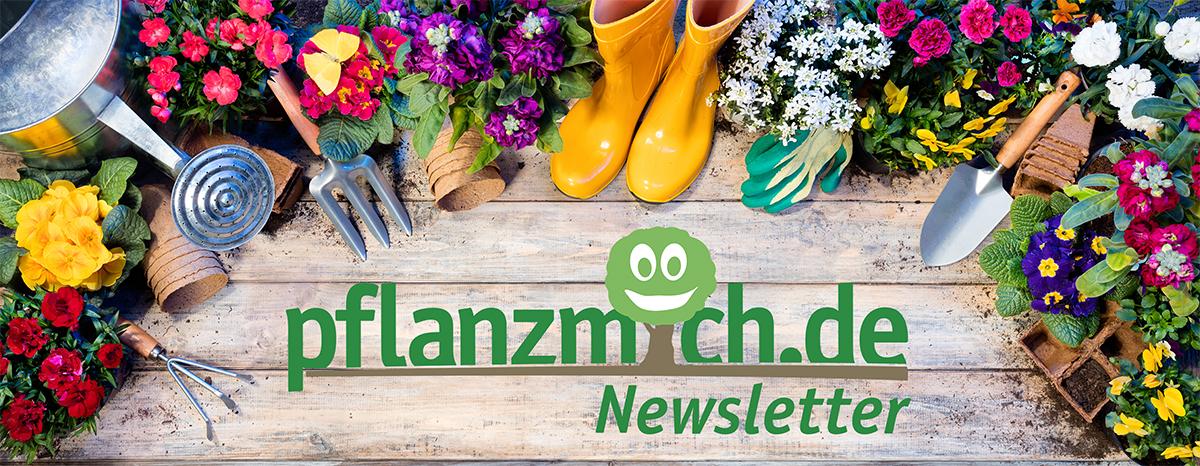 pflanzmich.de Newsletter Header