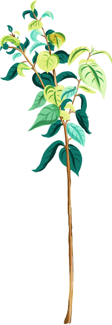 replanted tree
