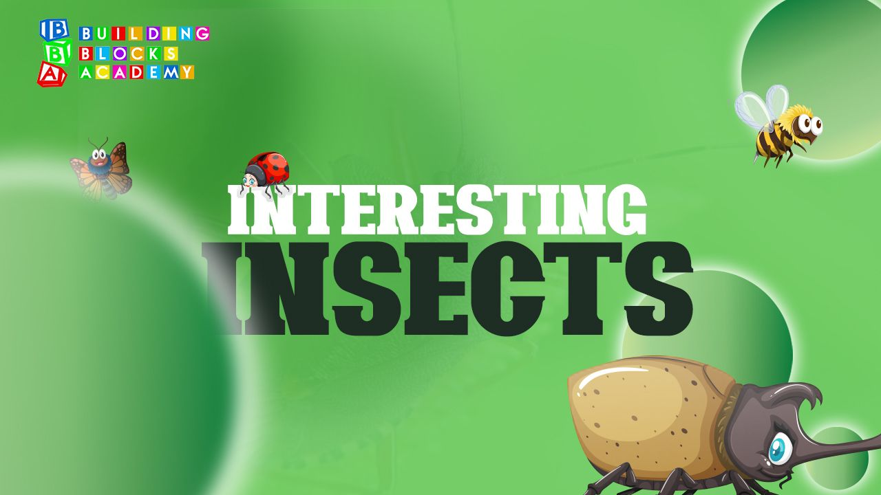 Interesting Insects - Building Blocks Academy