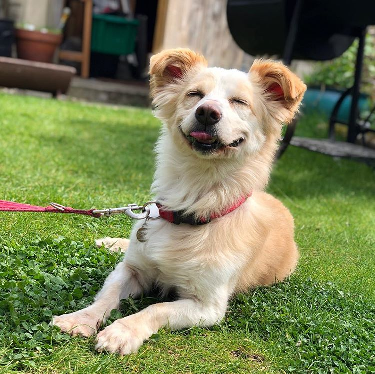 Small dog smiling