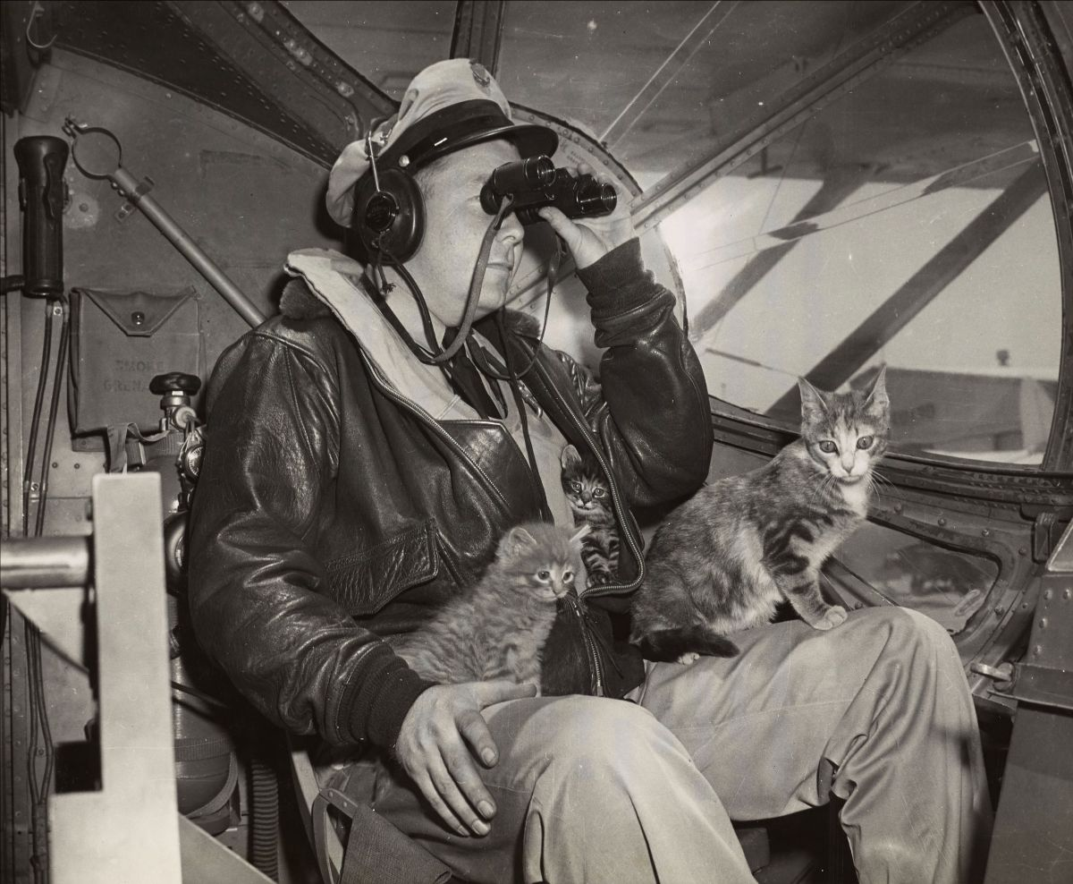 Black and white photograph of a Coast Guard member looking through binoculars while two cats sit on his lap