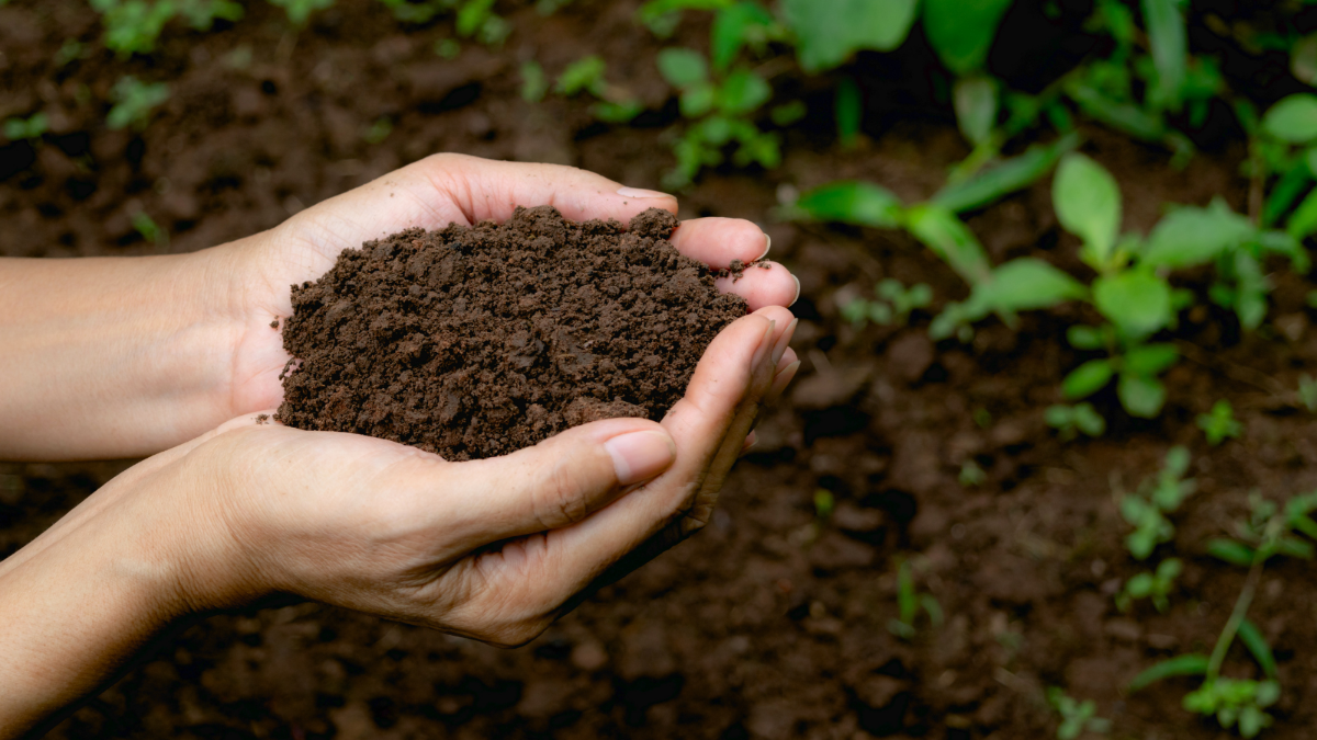 A set of hands holding soil.