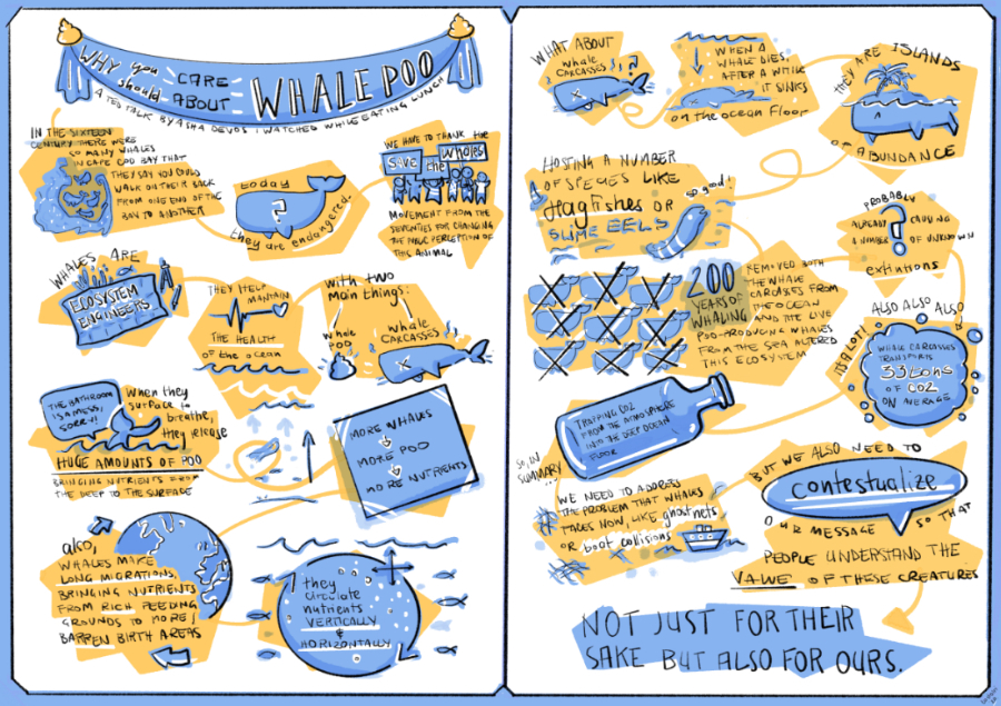 whale poo graphic recording