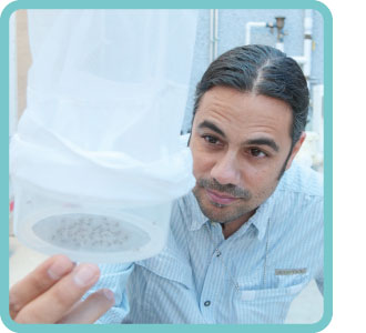 Vivek Raman, supervisor of the Health District's mosquito control team, observes mosquitoes caught in a trap.