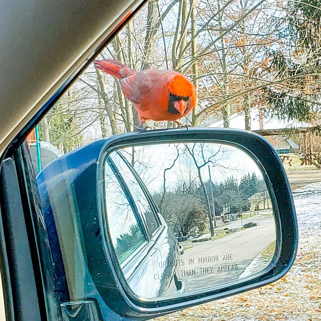my cardinal friend
