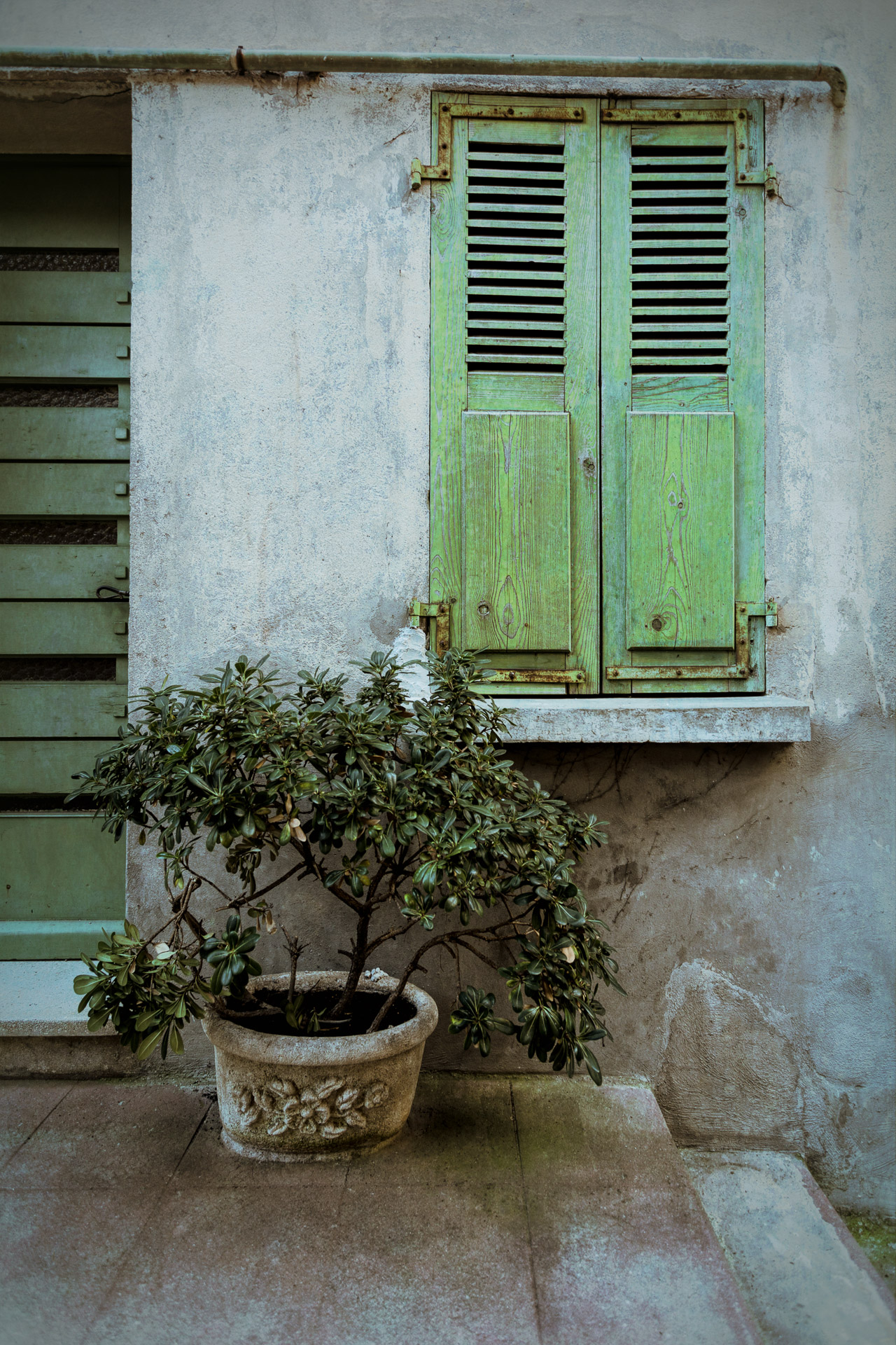 Green shutters and plant in Cannes, France
