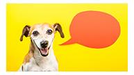 dog with cartoon speech bubble