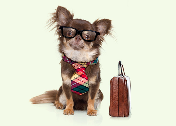 dog wearing glasses and tie with briefcase