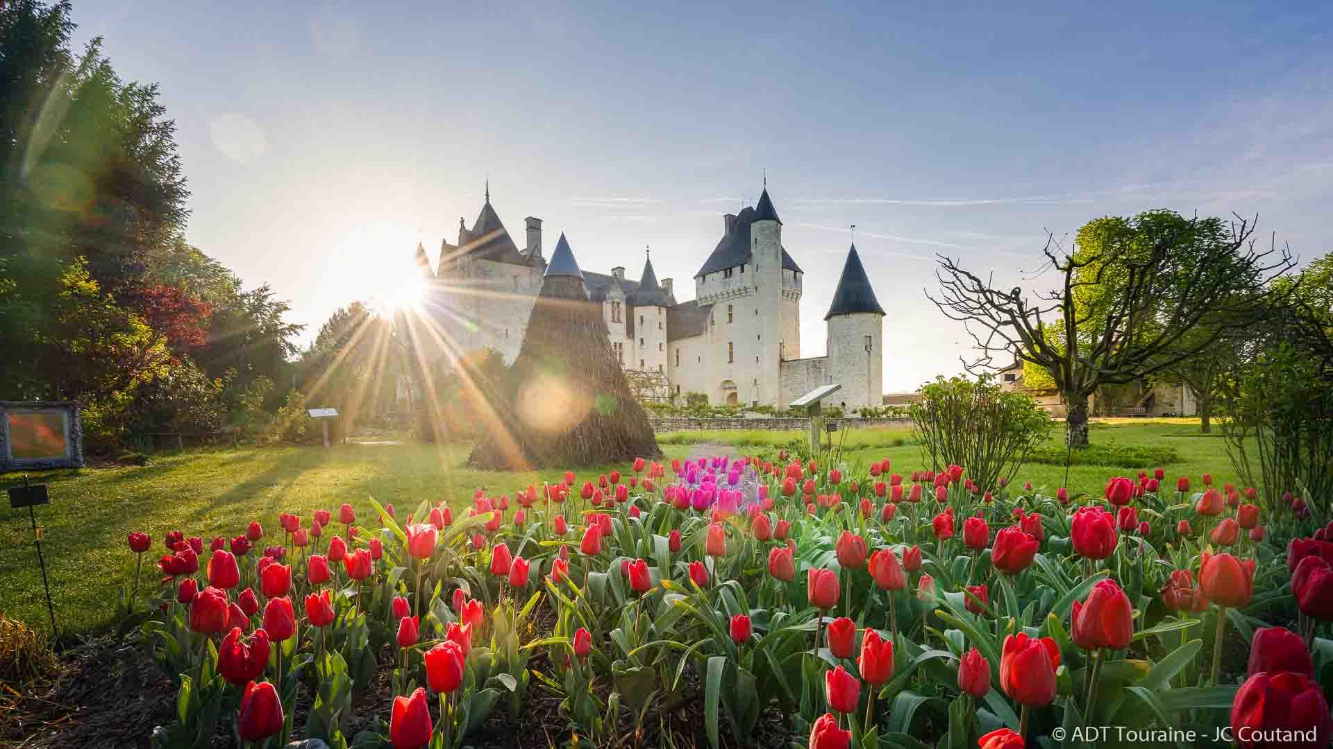 Tulipes au Rivau