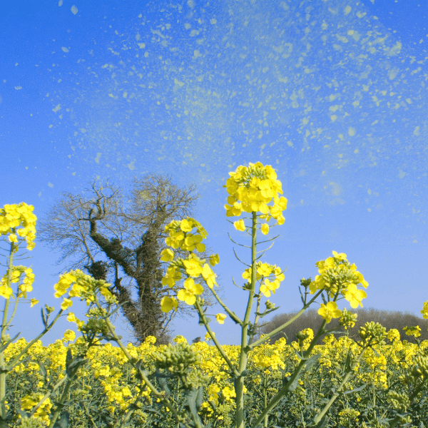 4 best supplements for clearing allergies naturally -Flowers with pollen in a field