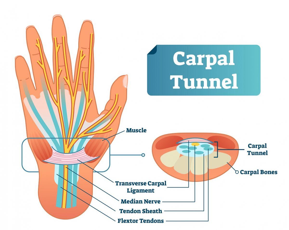 carpal tunnel anatomy infographic