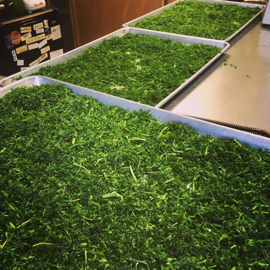 Parsley Drying