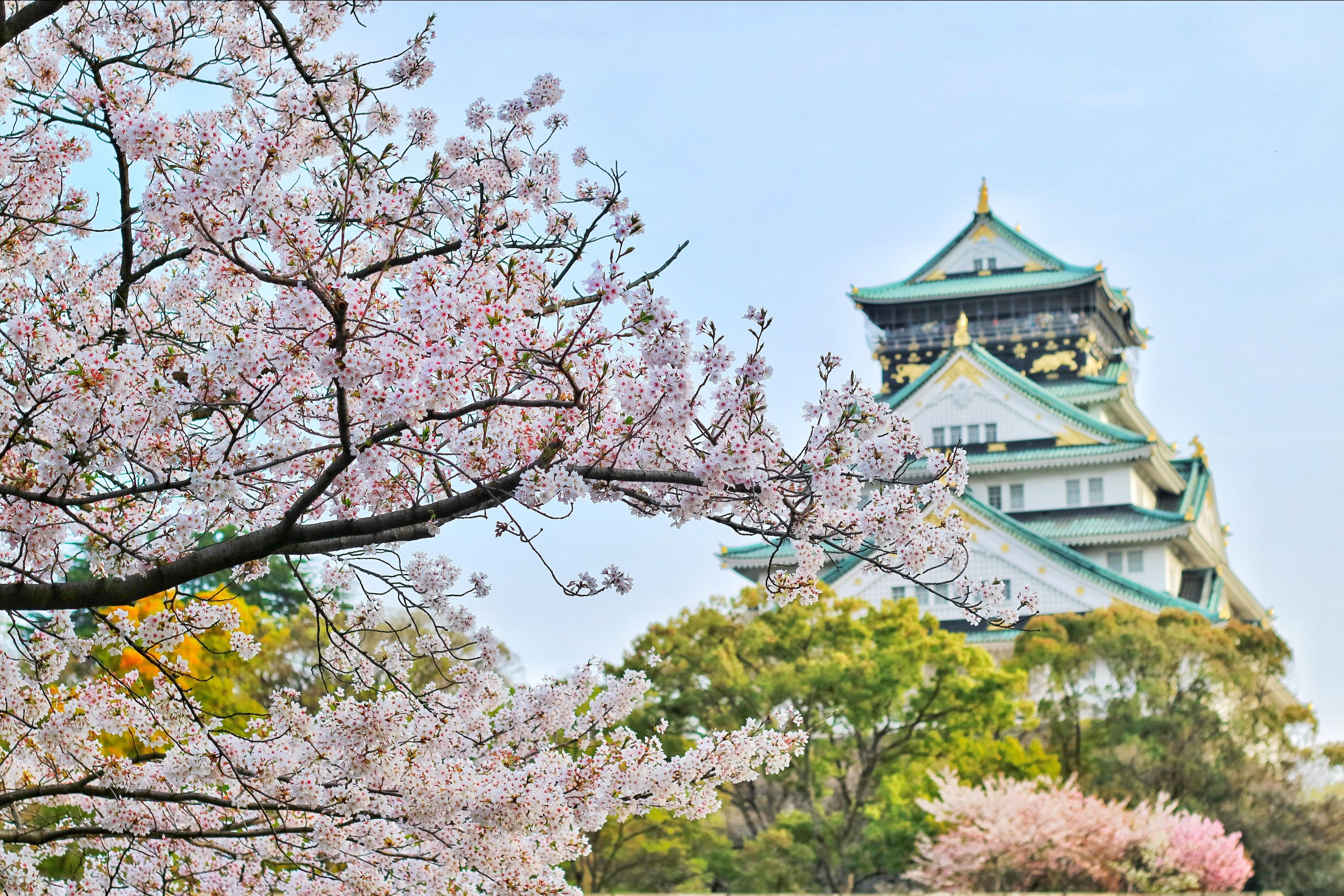 International Japan Staycation