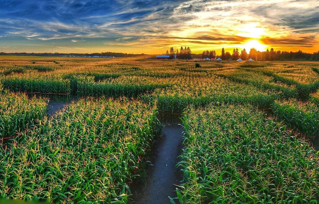 An Instagram image from the Edmonton Corn Maze.
