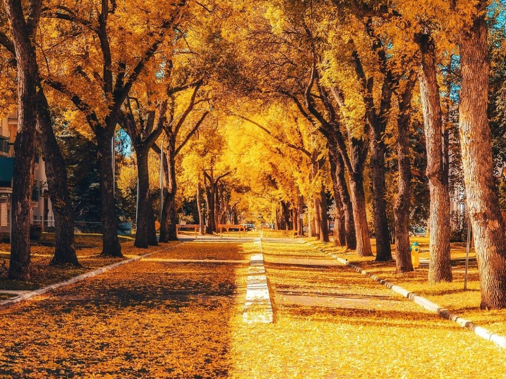 An image of fall leaves on the street.