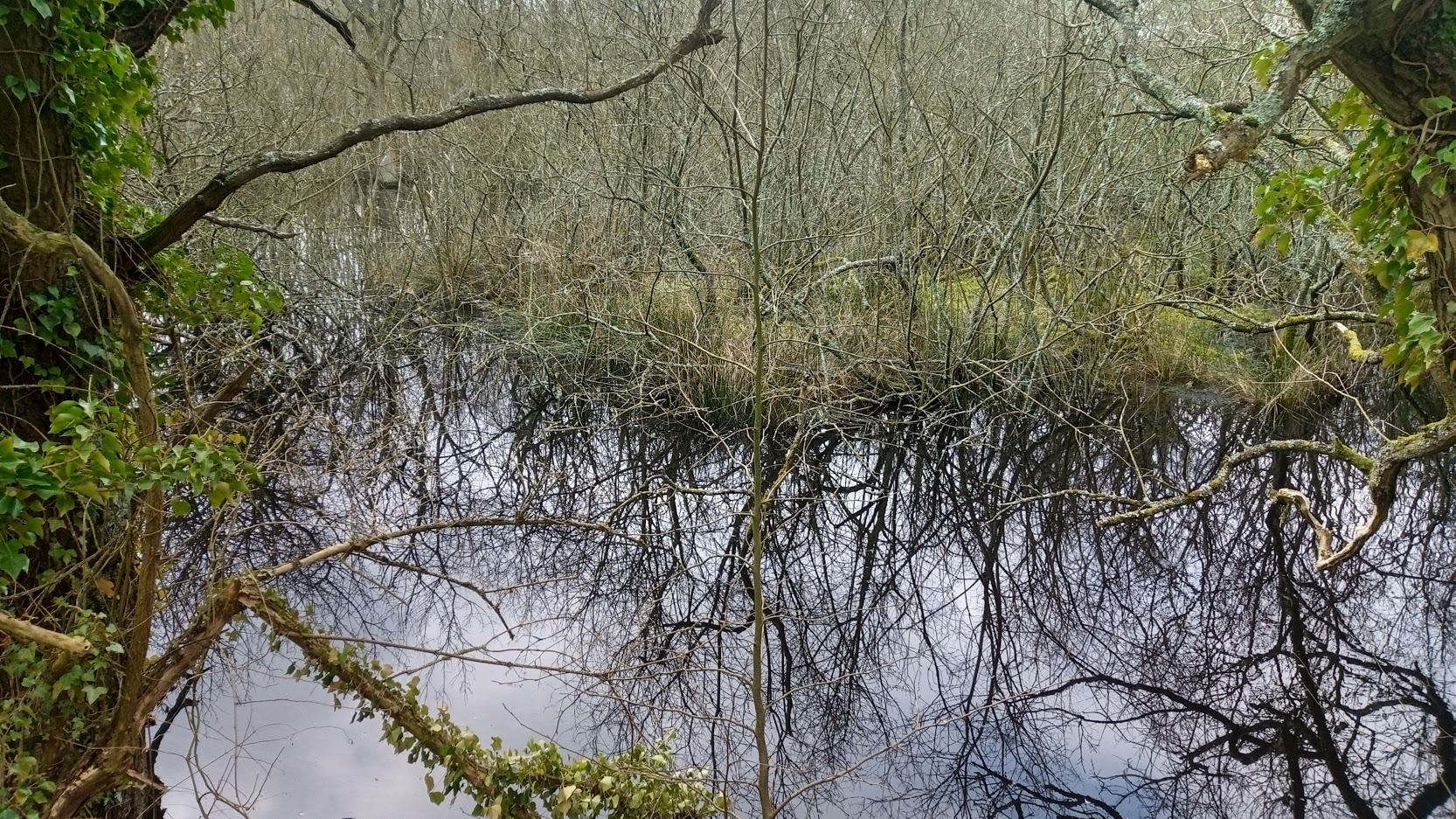 Photo 1: raft of vegetation consisting of sedges, rushes, willow and spiky bog-moss