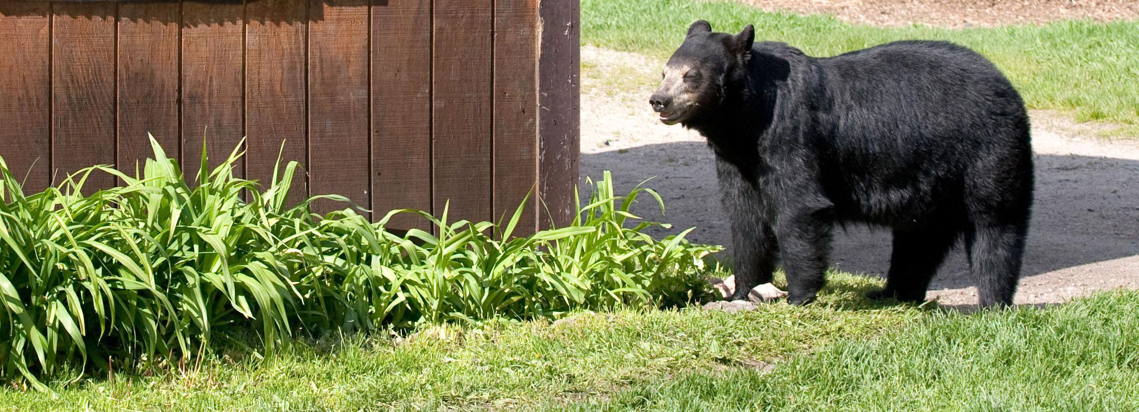 bear near building