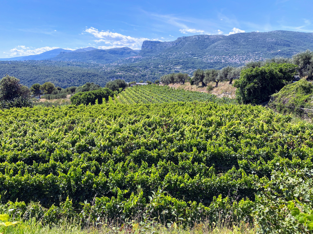 The Vineyards of Bellet