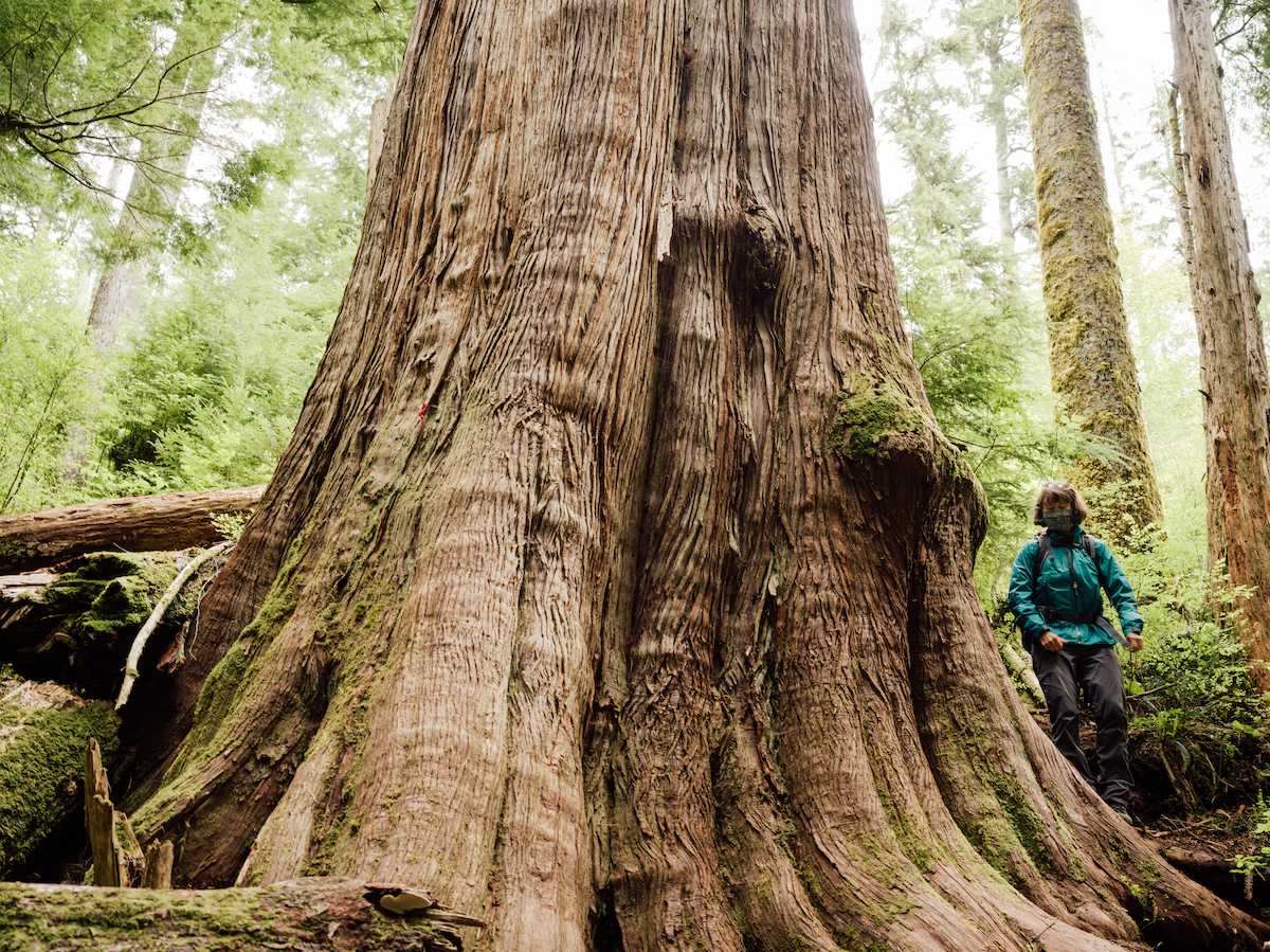 Sarah Cox stands next to an old tree