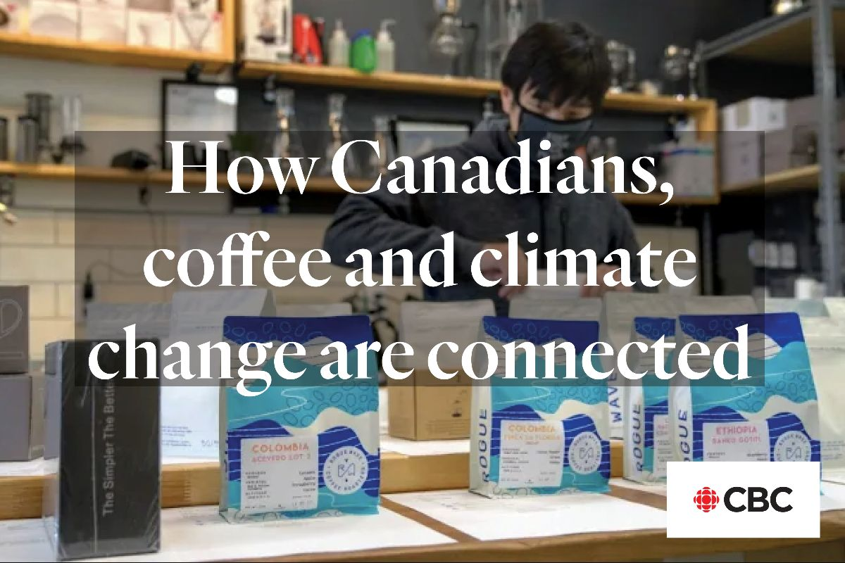 CBC article coffee and climate change