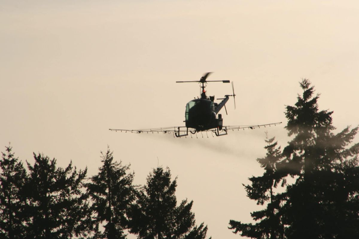 helicopter glyphosate spraying forest