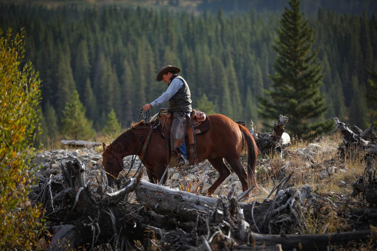 John Smith looks for cattle during the Plateau Cattle Company's fall round-up on their Mt. Livingstone grazing allotment
